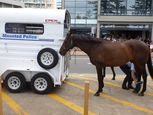 NSW Mounted Police Horse