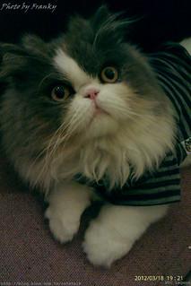 貓咪先生的朋友