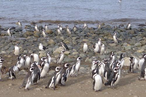 Punta Arenas-54