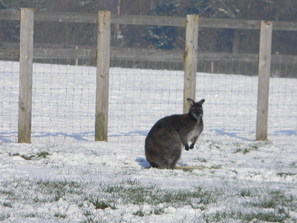 Frosty wallaby... ....yes, wallaby... Saunderton to Bledlow