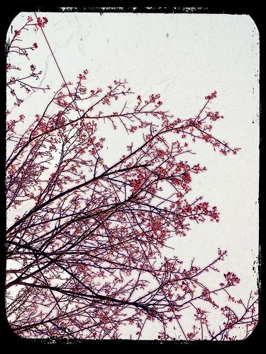 2012.2.12 ::: 三芝櫻花小旅行-2 by 南南風_e l a i n e