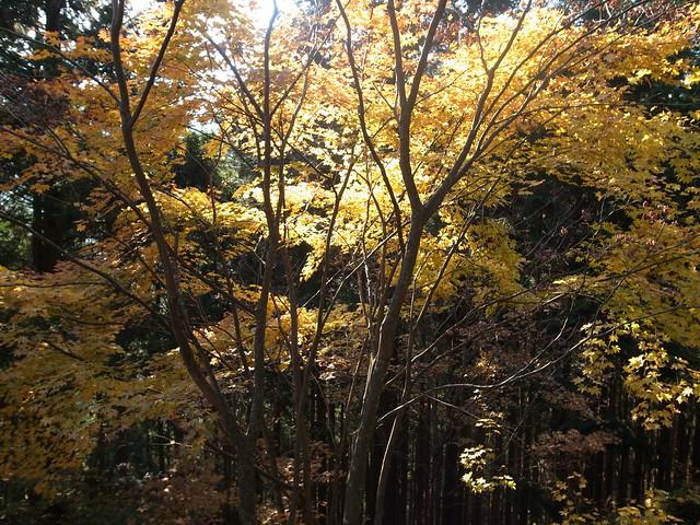 御岳山紅葉2011