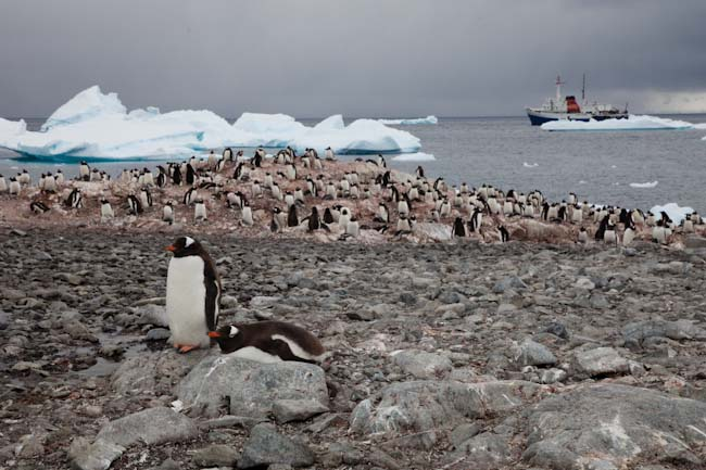 antarctica-blog-58