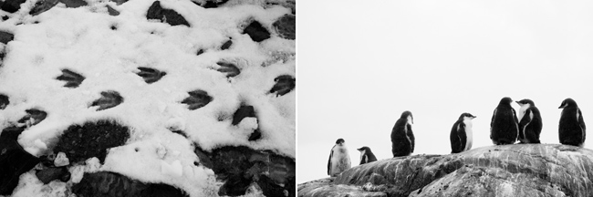 antarctica-blog-85