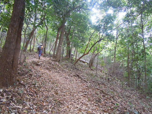 Brahmagiri_Trek_Path_Leaves