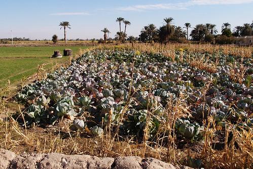 Aswan_Abu Simbel30