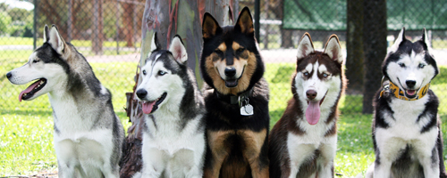 Florida Huskies and the NEW addition 9/5/13 6877191385_f831cf231c