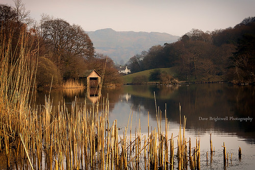 Through The Reeds by Dave Brightwell