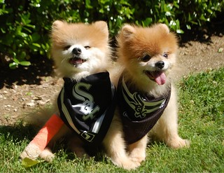 Teddy & TJ are ready for another White Sox Opening Day!!