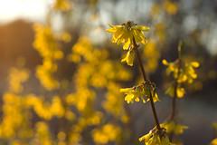canola, vegetable, pollen, flower, yellow, sunlight, plant, macro photography, wildflower, flora, produce, close-up,