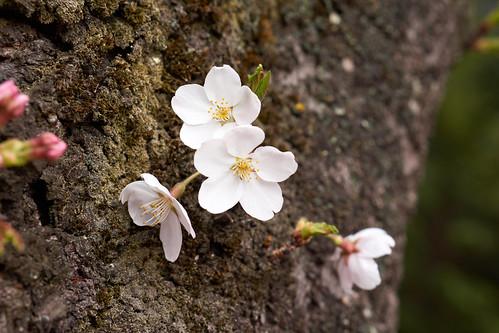 AKG_2012-04-19_054