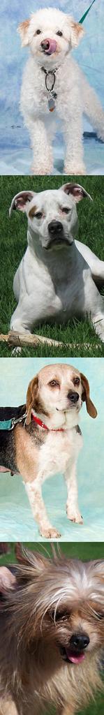 Senior Dog Program