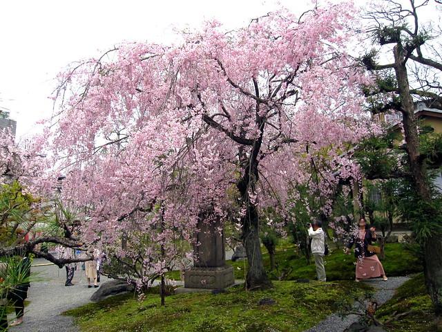 Inside the Gion Kobu Kaburenjo's garden