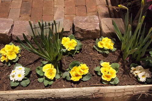 primrose plants arranged using gauge blocks or something - talk about unnatural feeling