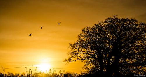 trees england birds sunrise flickr unitedkingdom bss curbridge