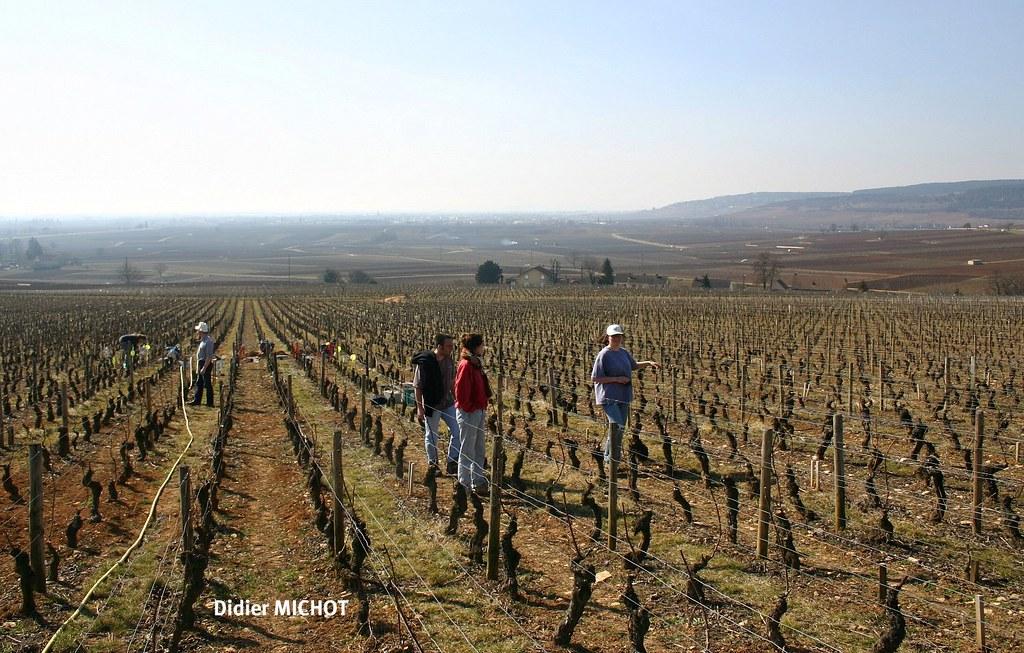 côteaux et vignes de Bourgogne dans le soleil et la douceur de la mi-mars 2005 météopassion