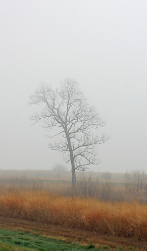 Lonely Tree in Fog 2