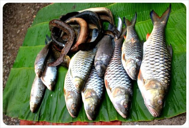 luang prabang morning market fresh fish