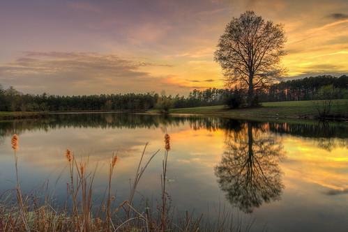 sunset reflection tree landscape pond north carolina