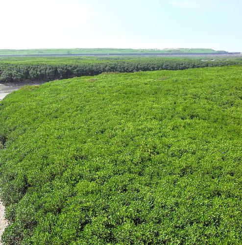 Hsinchu Swamps