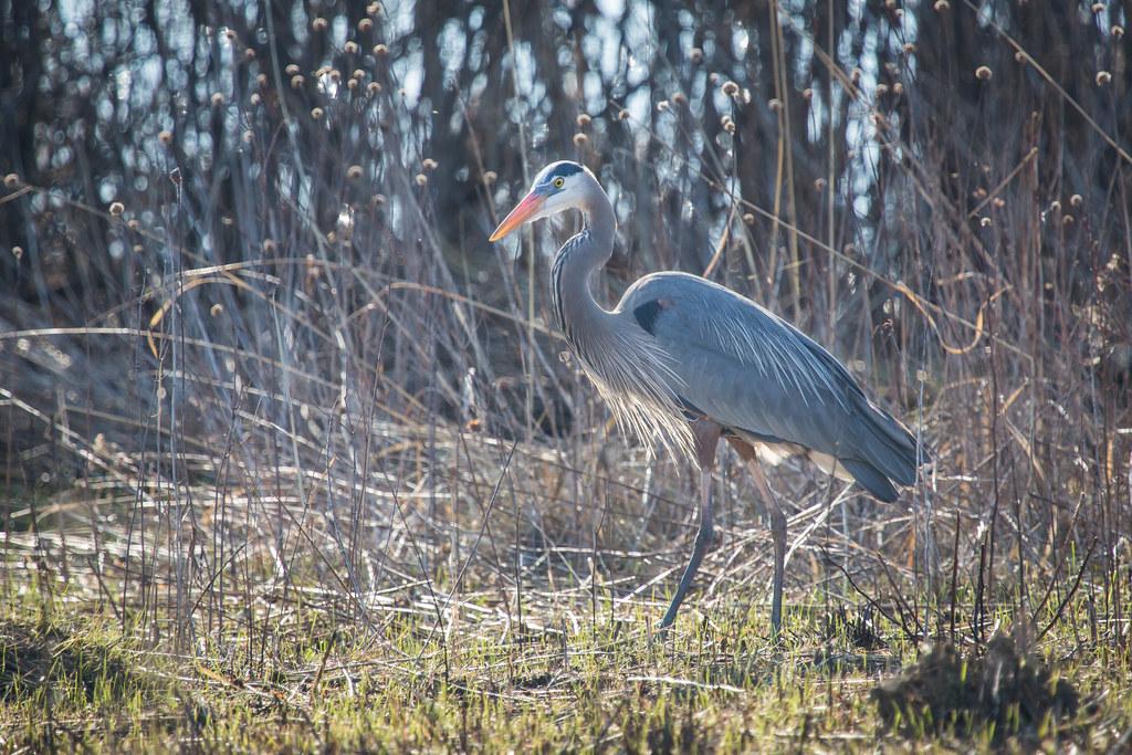 Almond Marsh Forest Preserve Illinois Tripcarta