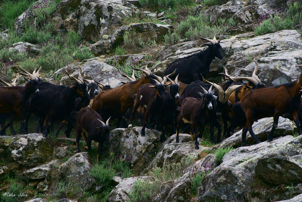 Extremadura_ Caceres (3)