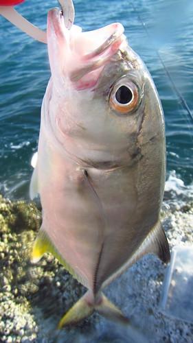 Koh Samui Fishing ギンガメメッキ28センチ