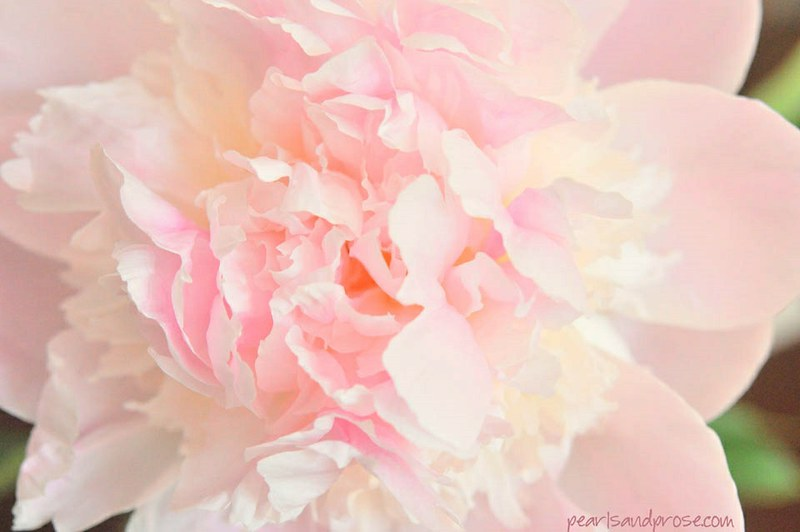 pink_chiffon_vert_web