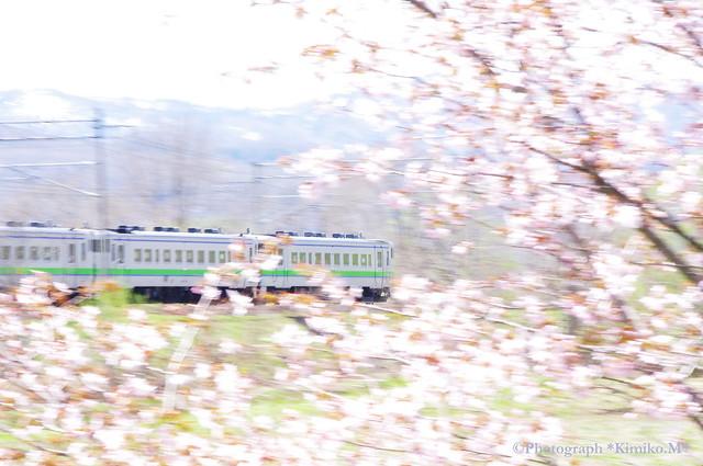 桜とキハ40