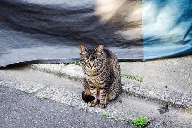 Today's Cat@2016-06-06