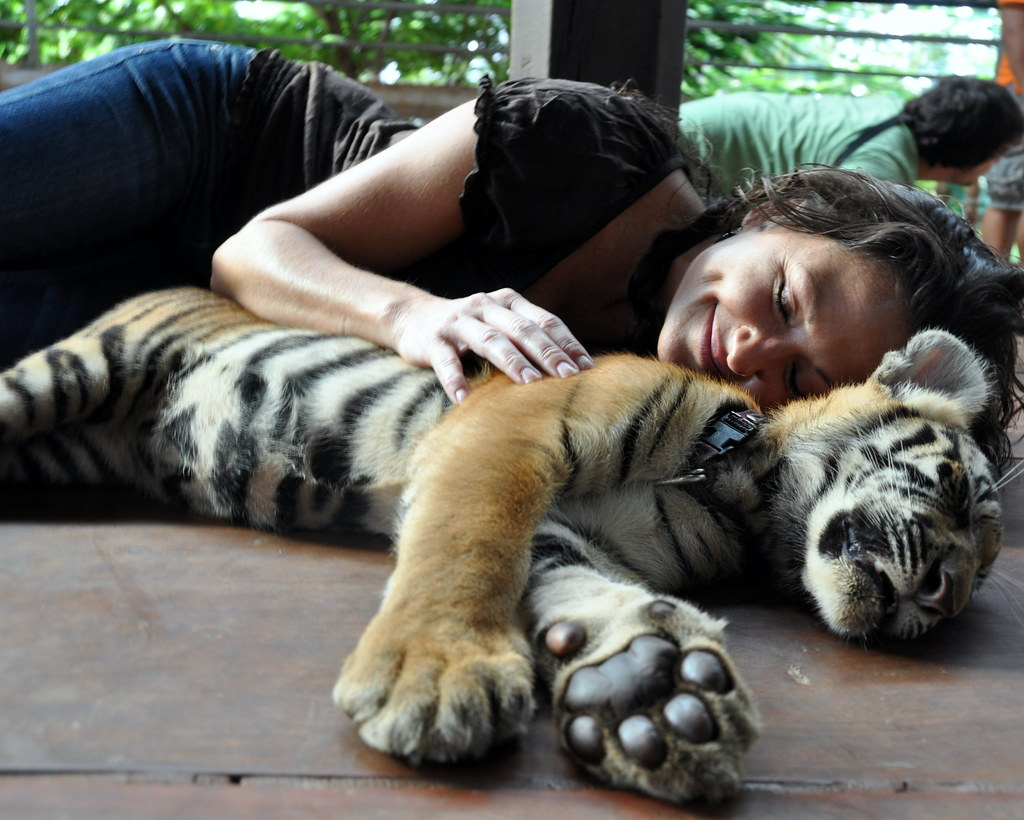 Baby Tiger in Bangkok