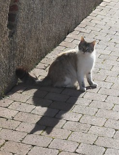 MEow AND MY SHADOW!