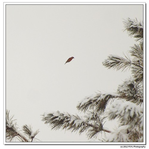 2012-02-25-1-P2259044