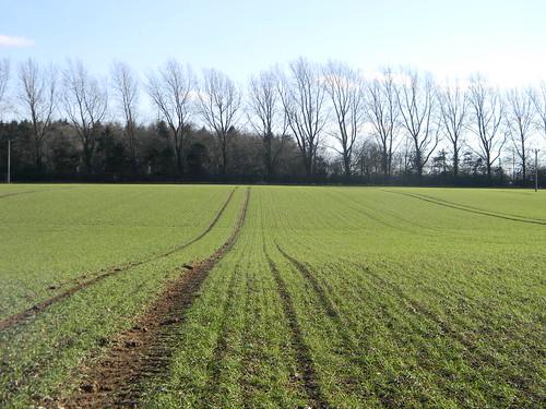 Field pattern and treeline
