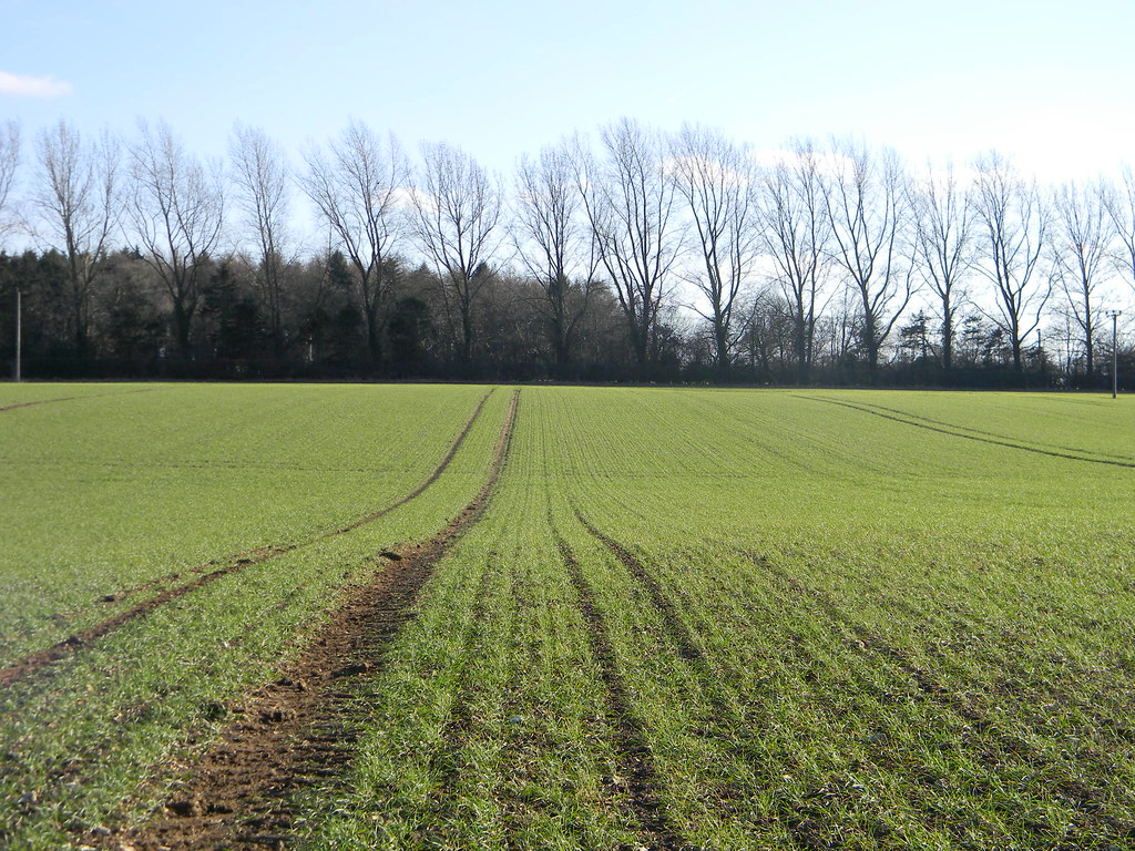 Field pattern and treeline Chesham to Great Missenden