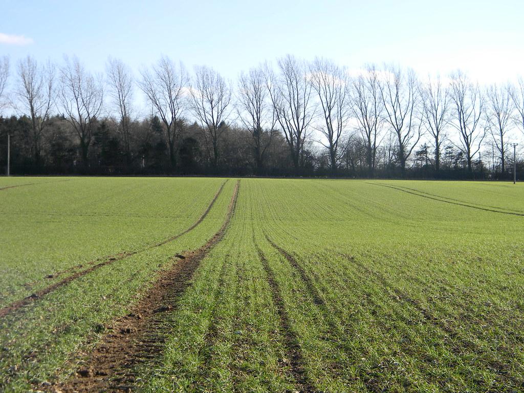 Field pattern and treeline Chesham to Great Missenden