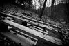 Holz im Wald by Mr.Muli