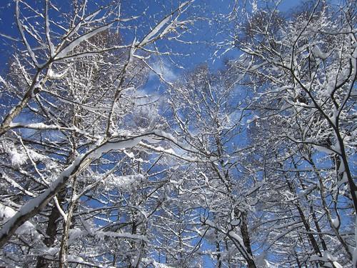 唐松の雪 2012年3月11日 10:05 by Poran111