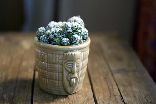 Kon Tiki Cactus