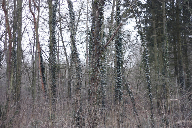 hejregina träd5
