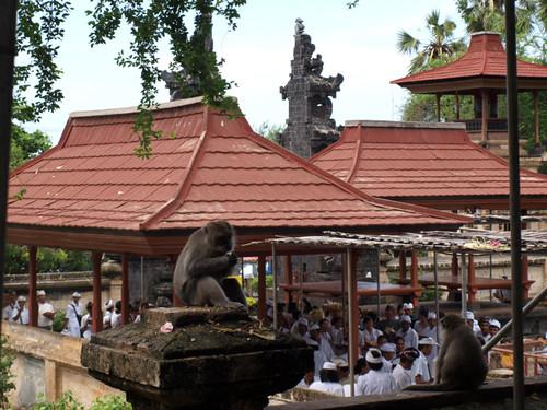 народ и макаки ждут церемонию