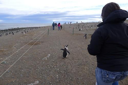 Punta Arenas-62