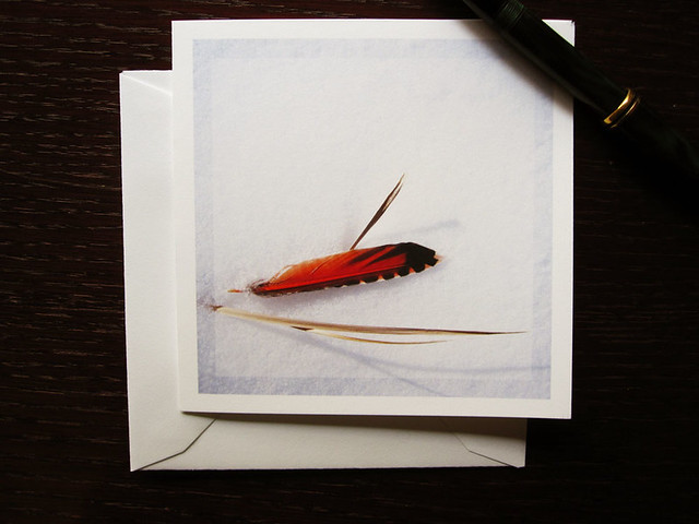 Nature feather card, a flicker feather minimalist blank card, of a single orange feather resting on a field of snow.