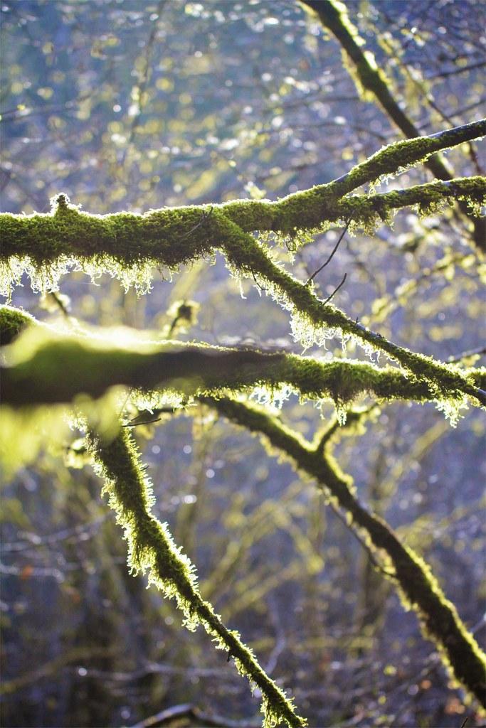 Week Thirteen: Nature
