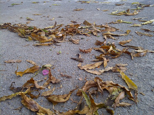 Dried Fall Leaves