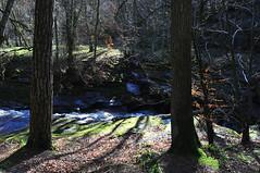 Gelt Woods