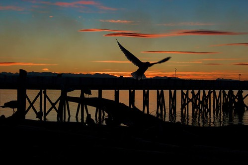 sunset reflection water pier seagul snohomish olympicmountains cloudskayak
