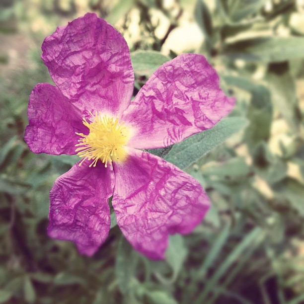 purple paper...