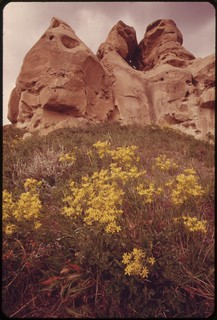 Flowers and rock formations at the Roy Fly ranch in Sarpy Basin, 06/1973