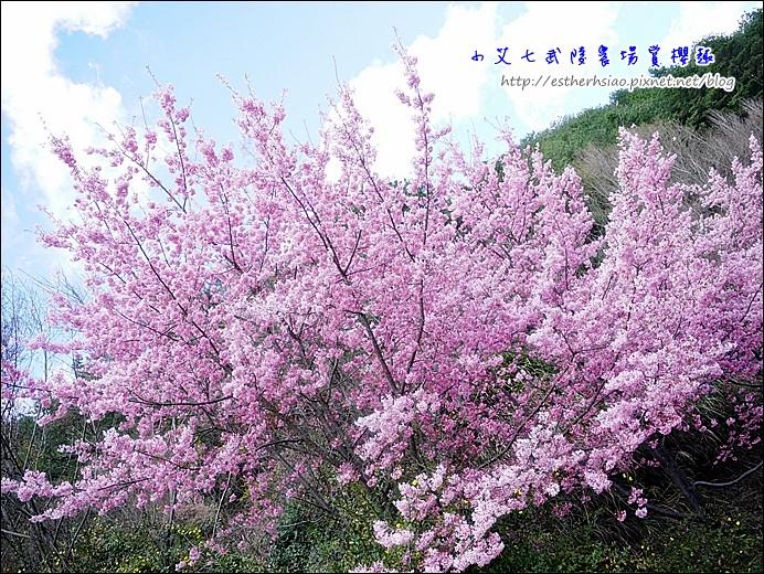 19 柔焦粉粉